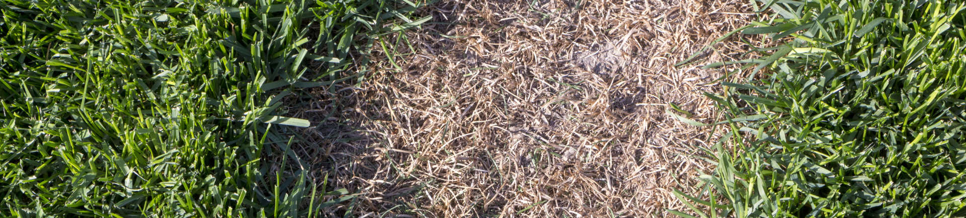 brown spot in lawn