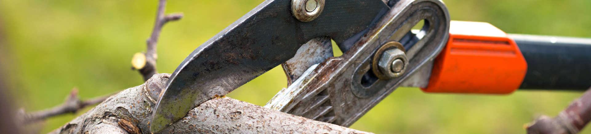 Alpharetta GA professional cutting and shaping shrubs